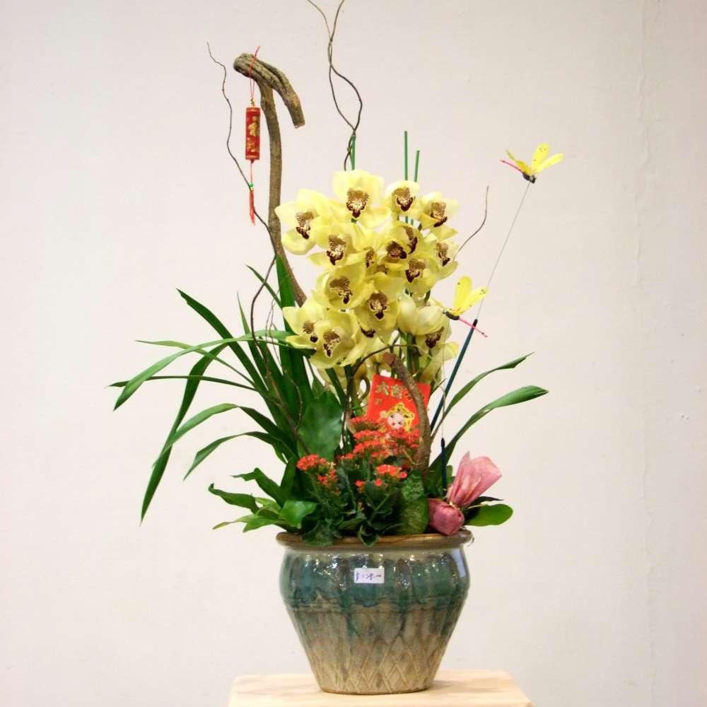 Top 28 plants arrangements urban flower australian for Garden arrangement of plants